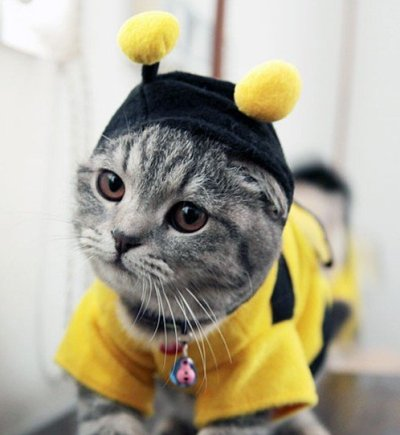 Cat dressed as a bee