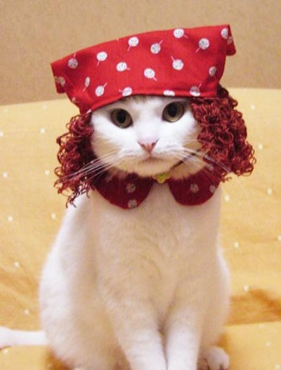 Cat dressed as Lucille Ball