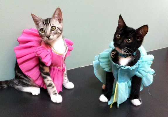 Cats dressed as princesses