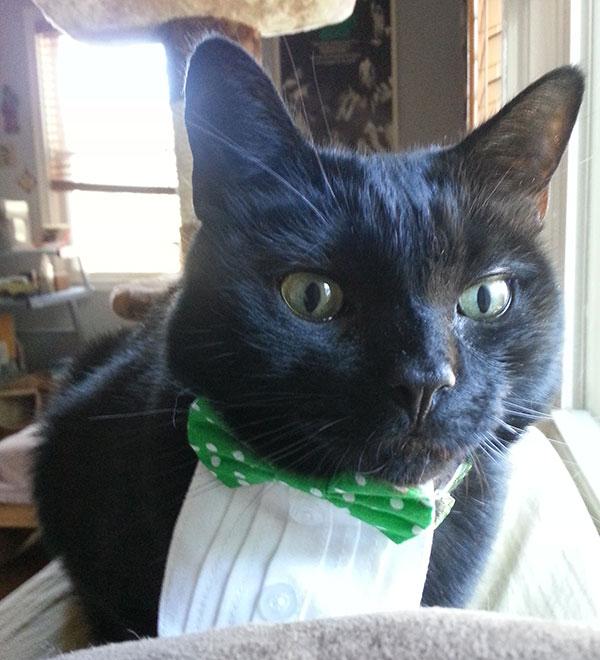black cat Nod