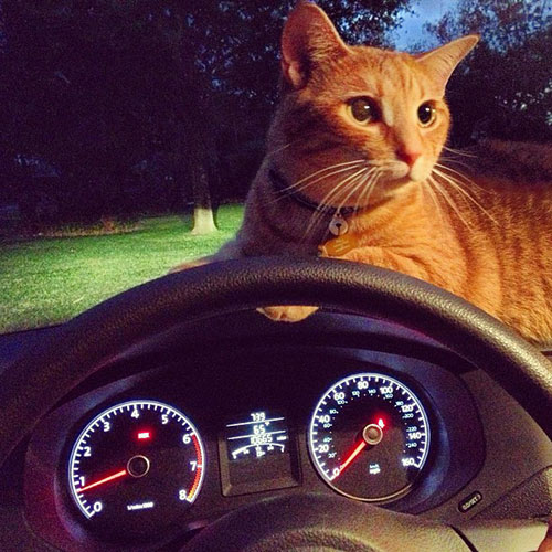 Catnap in the car