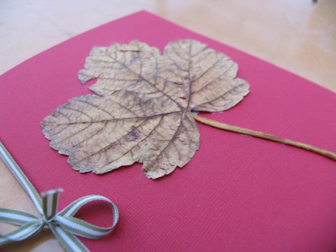 Leaf collection booklet