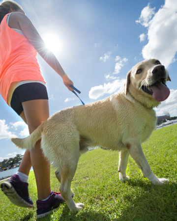 Get your pet to a healthy weight