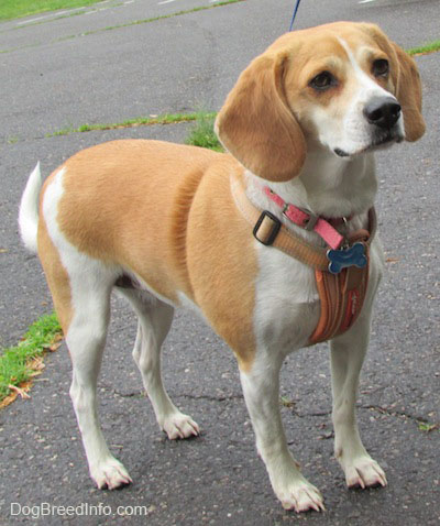 Best Family Dog Breed for Me - Dog Breeders Guide