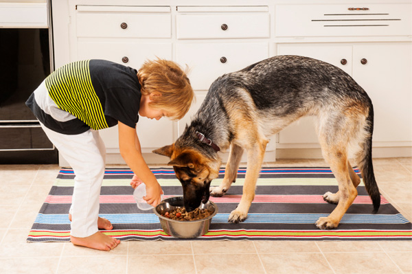 Best Indoor Dog Food