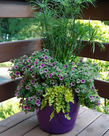 Experts tips for a lush patio garden