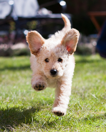 How to train high- energy dogs