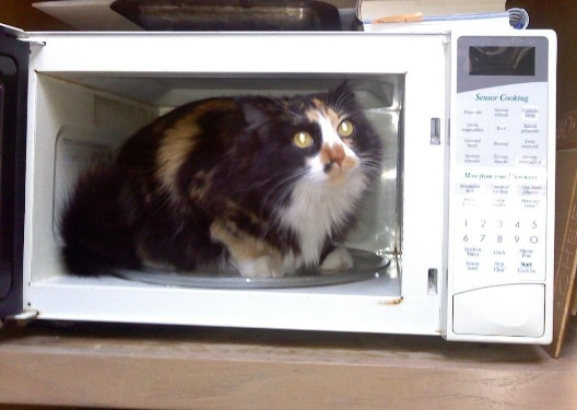 Cat hiding in microwave