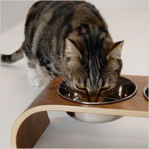 Modern cat feeder