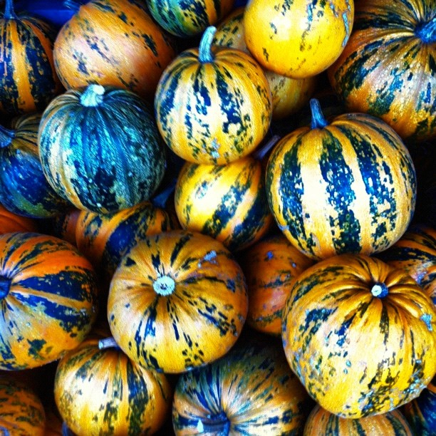 Hot pumpkins in different hues!