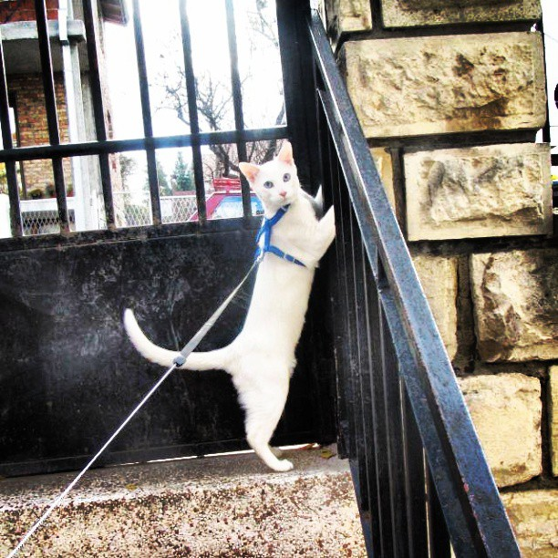 cat on stair railing