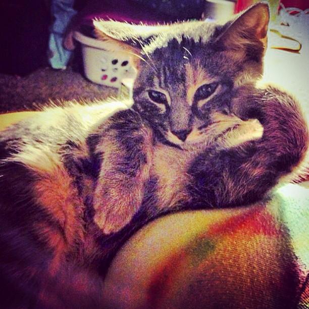 cat resting on arm