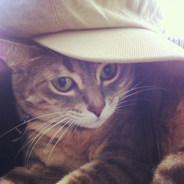 cat wearing brimmed hat