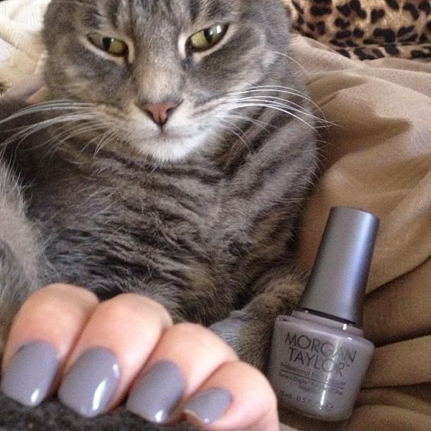 cat with nail polish