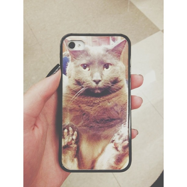 cat on iphone case