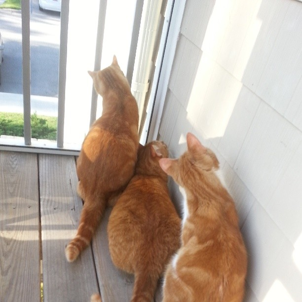 cats at door