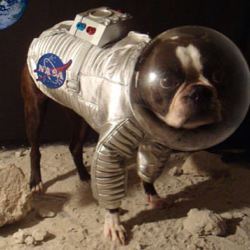 Astronut dog