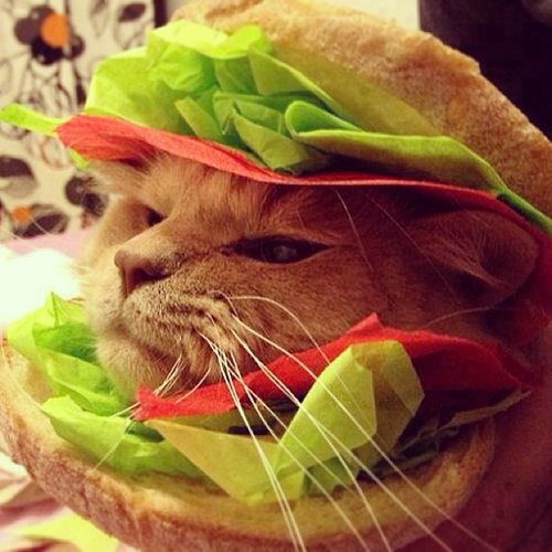 Hamburger cat