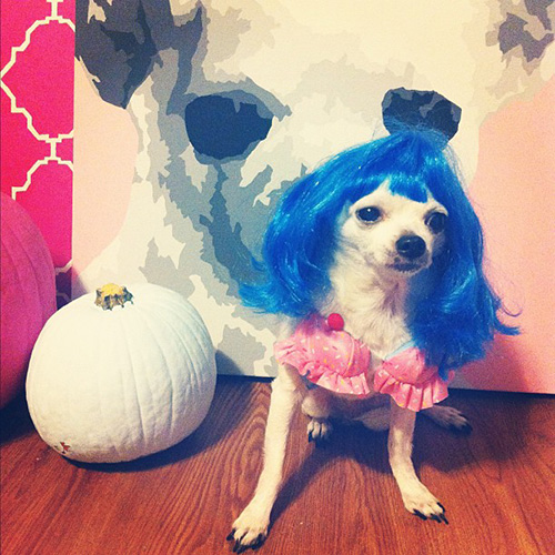 Katy perry dog