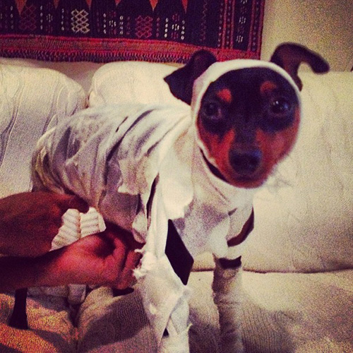 Mummy Dog