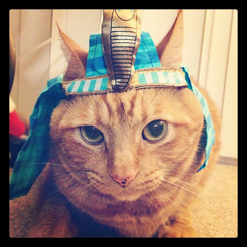 Pharoh cat
