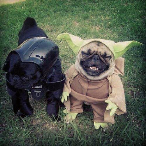 Star Wars dogs