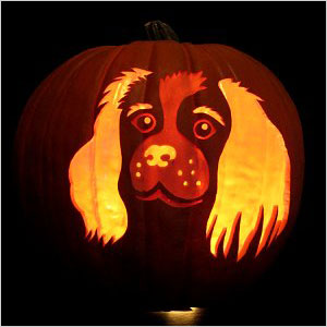 Masterpiece Pumpkins puppy