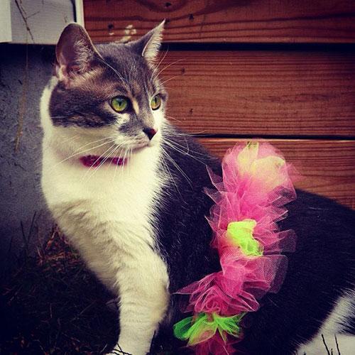 Ballerina Kitty 10