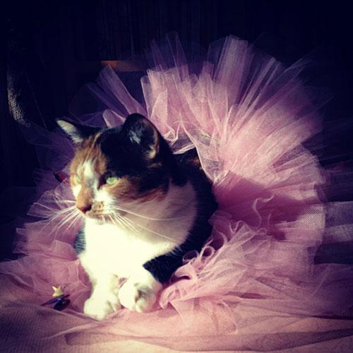 Ballerina Kitty 12