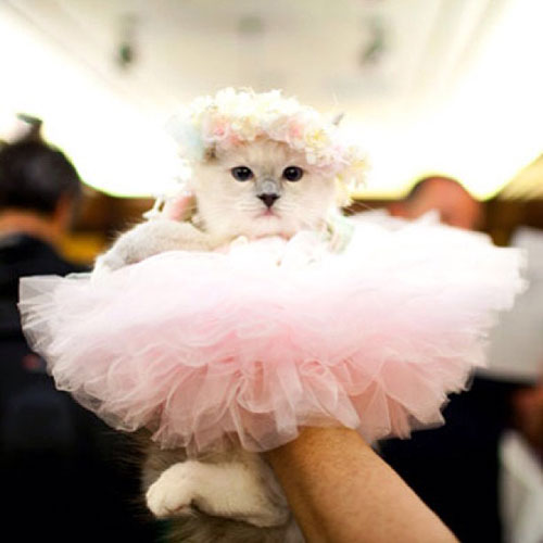 Ballerina Kitty 16