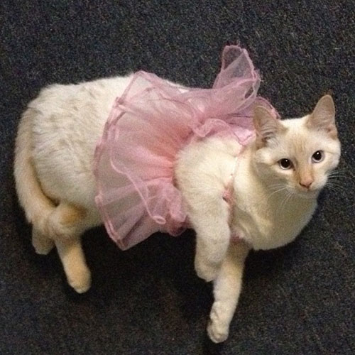Ballerina Kitty 19
