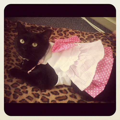 Ballerina Kitty 20