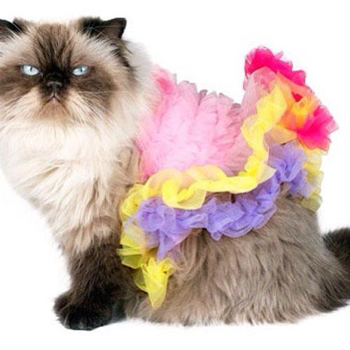 Ballerina Kitty 7