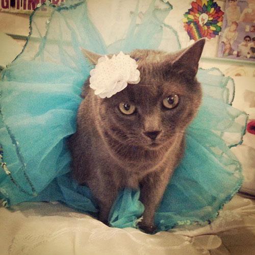 Ballerina Kitty 8