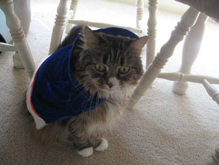 Cat in blue cape