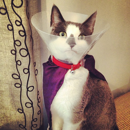 Cat in cape and cone
