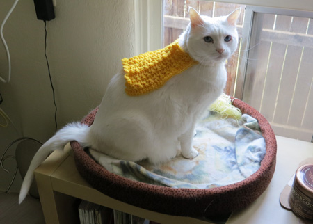 cat in crochet cape
