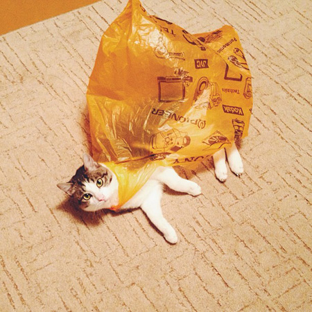 Cat in a plastic bag.