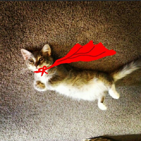 Cat with photoshop cape