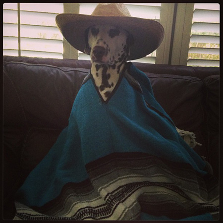 Dog in poncho