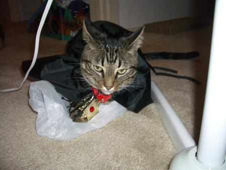 Vampire cat costume