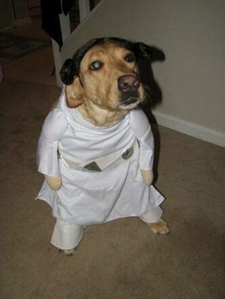 Leia dog
