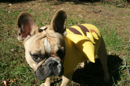 Embarrassed dogs in Halloween costumes