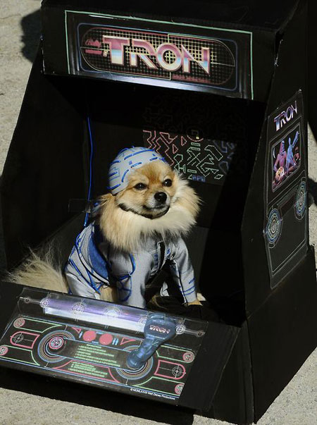 Tron dog