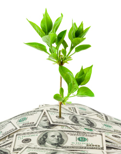 money investment concept money growing
