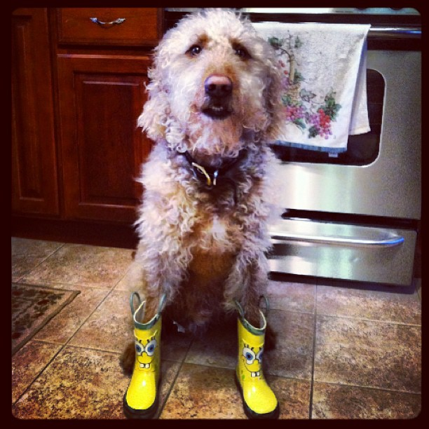 Dog in spongebob boots