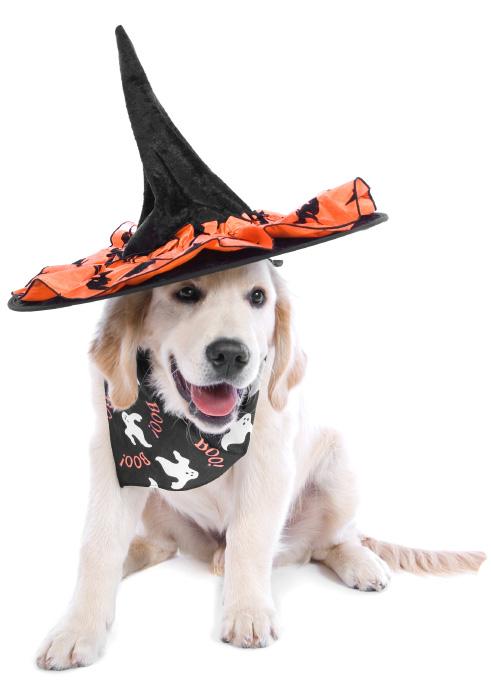 Howlin' Halloween pet fun