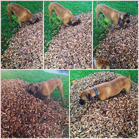 Curious canine