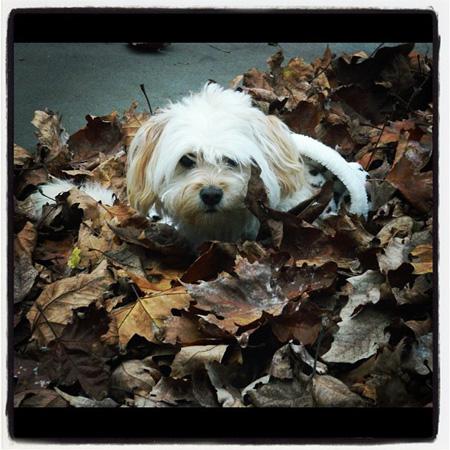 The leaf life