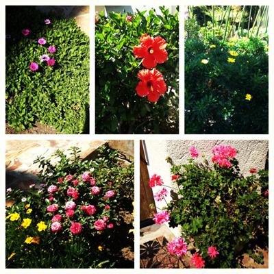 Mindy Kaling's garden
